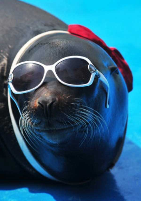 Some Really Cool Animals 33 Photos Klyker Com