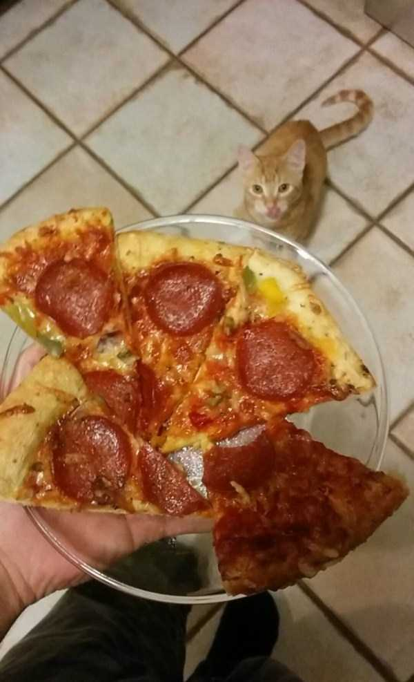 Animals Love Pizza Too Klyker Com