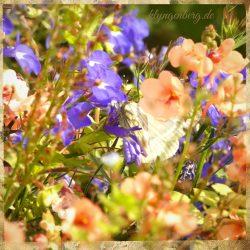 Blumen im Garten Seminarhaus Klyngenberg 2 - Impressionen