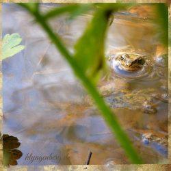Frosch im Teich Seminarhaus Klyngenberg 2 - Impressionen