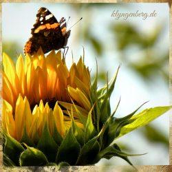 Sonnenblume Seminarhaus 2 - Impressionen
