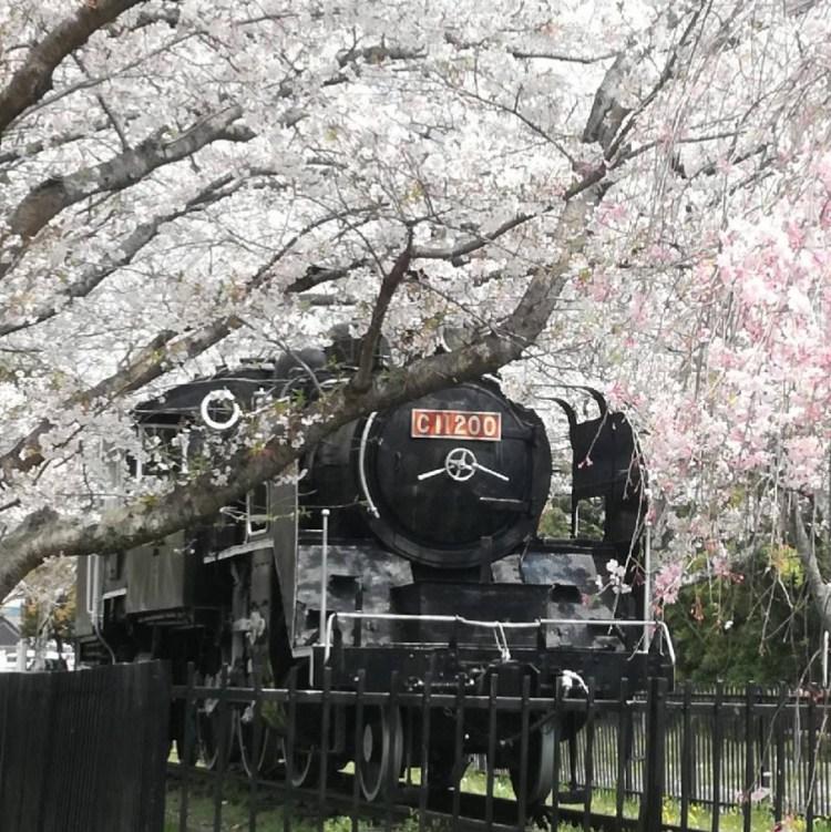 桜と蒸気機関車 たつの市