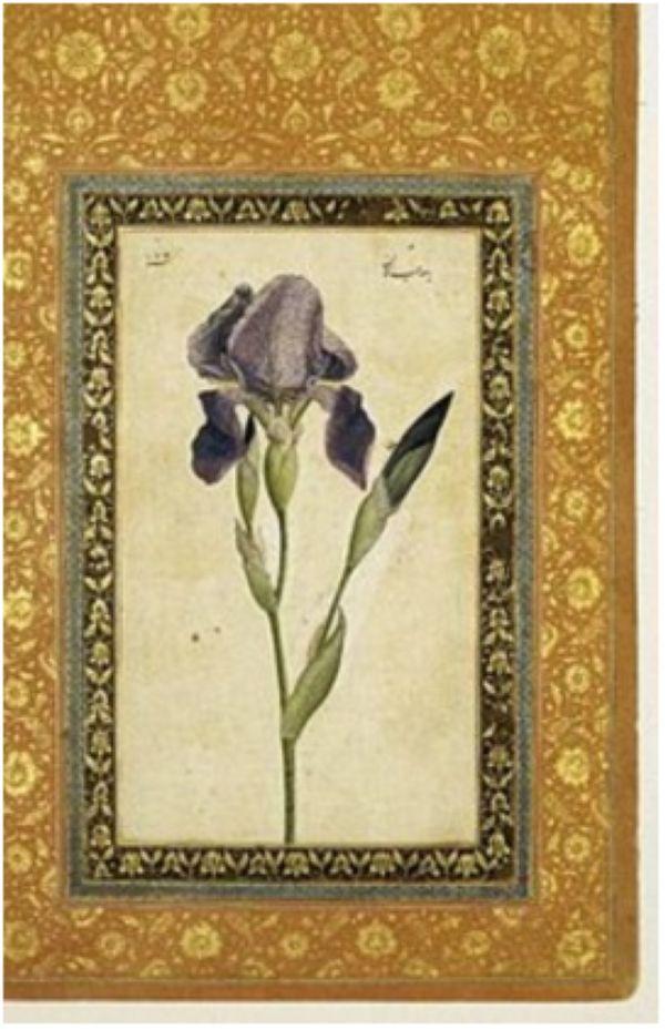 """Мухаммед Заман. """"Чекилдек гүлү"""". (1663-64). Бруклин музейи, Нью-Йорк."""