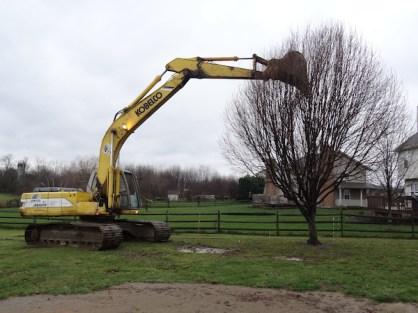 Home Addition - Goodbye G'pa Tree #1