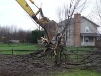 Home Addition - Goodbye G'pa Tree #3