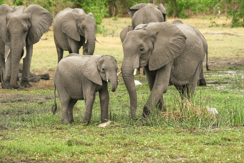 Liberia Celebrates Global Elephants Day, Calls For Massive Support To Protect Forest Elephants Nationwide
