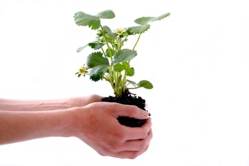 Write lead-nurturing blog posts: this is a photo of a hand holding and nurturing a seedling
