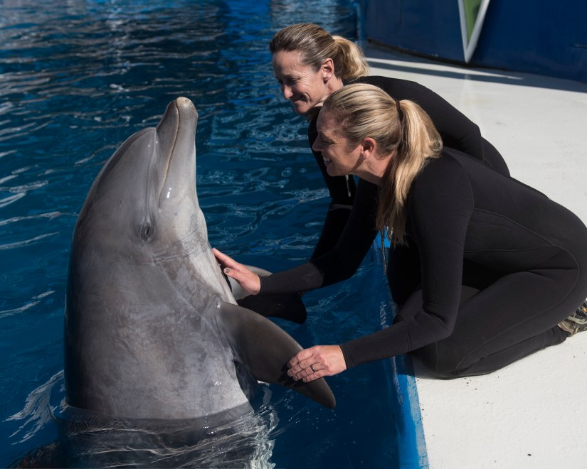 Bottlenose dolphin Sandy and her trainers