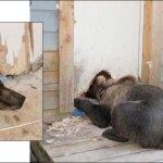 bear-shot.jpg
