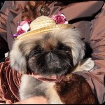 fancy_clothed_dog_stacie_joy.jpg