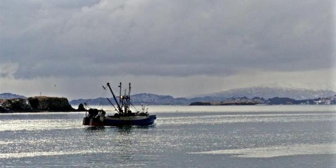 Fishermen are Having an Easier Time Finding Good Sized Pollock This Year