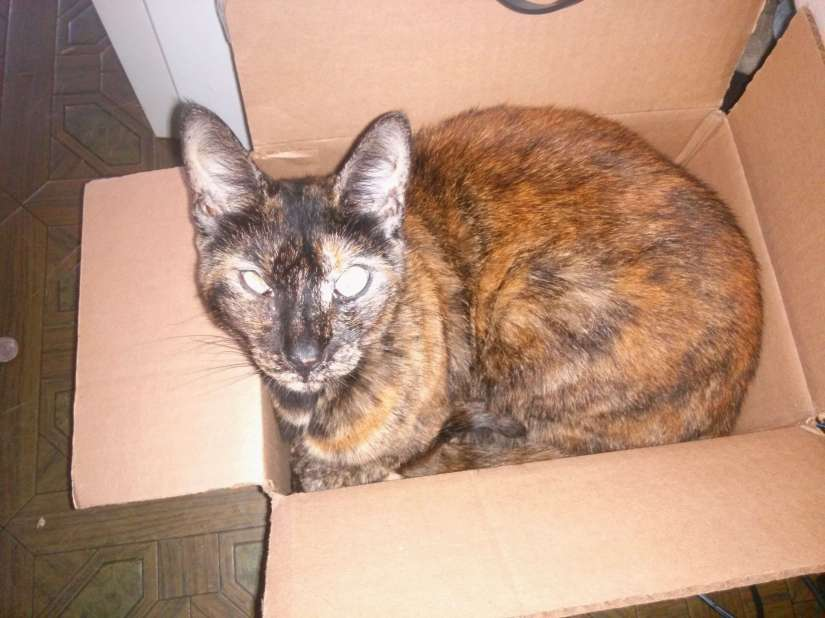 +Google Glass - Nutmeg approves of your shipping box (She refuses to give it back)