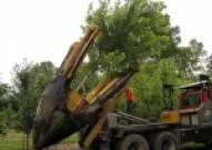 Planting a larger tree with a tree spade truck