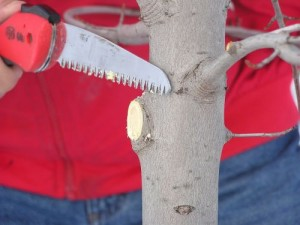 This is a correct pruning cut.