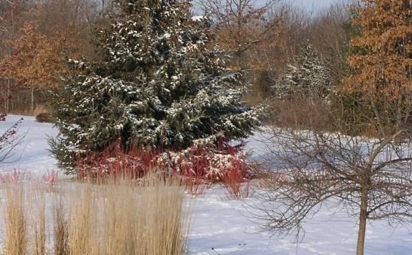 Adding Joy to the Winter Landscape