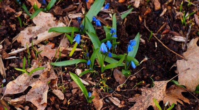 My Woodland Garden – April 1, 2016