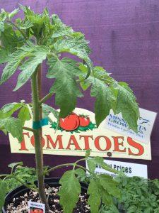 Let's Get Growing! Get those Tender Veggies Planted