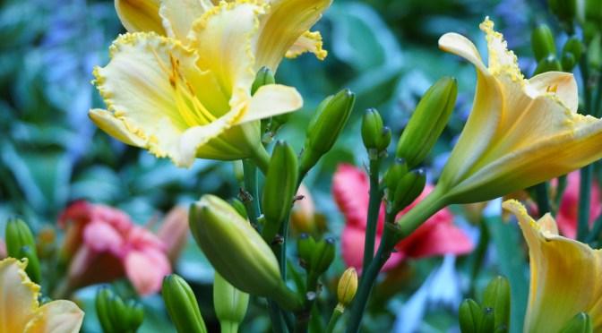 My Woodland Garden – July 14th