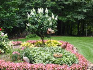 Tardiva Hydrangea