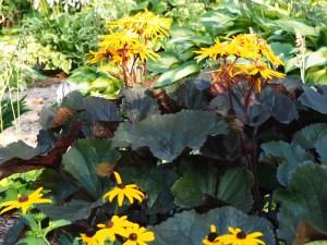 Plants for Wet Soils