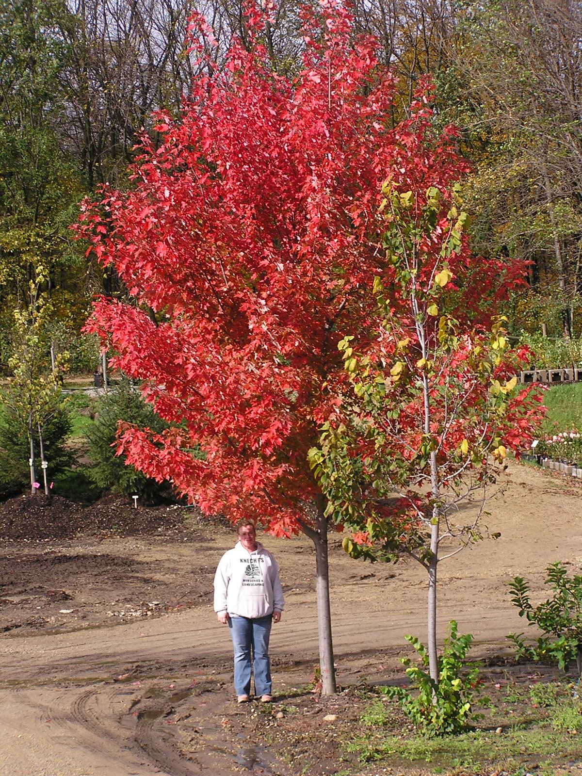 Check out the Fall Colors! - Knecht\'s Nurseries & Landscaping