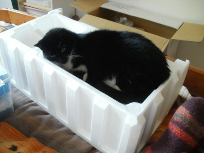 ... the cat who loves every packing material... here with the styrofoam after I unwrapped my new sewing machine