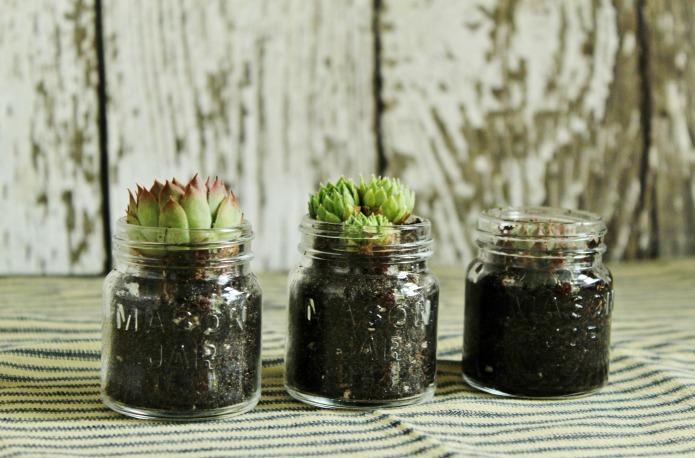 Best Light Bulb Growing Plants
