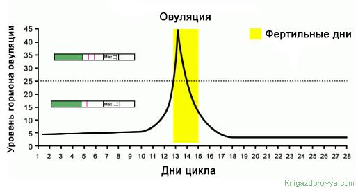 14c9e8ec4da Just see hormooni piik tähistab testi. Ovulatsioon toimub keskmiselt päevas  pärast testi, mis näitab kahte riba. Raseduse tõenäosus on väga viljakas  kahel ...