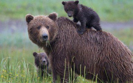 Bear Camp Adventure