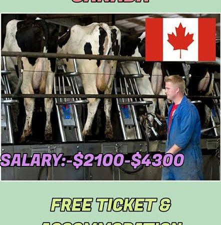 Dairy Farm Workers Urgently wanted in Canada  Apply Now