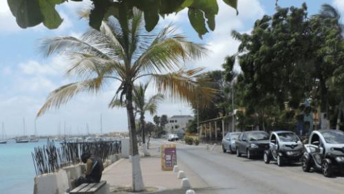 De palmbomen op de Boulevard van Kralendijk hebben het zwaar