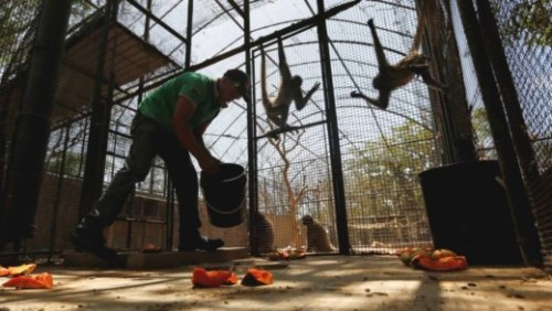 Honger: paard in dierentuin geslacht