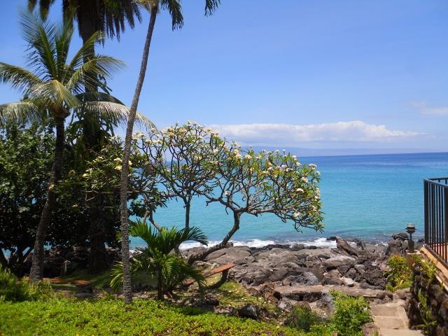 Flowering Tree, Maui