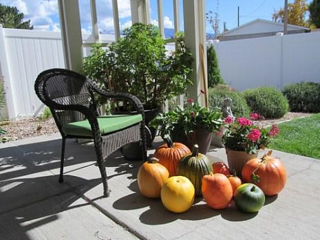 paulas-pumpkins