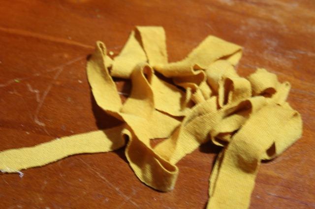 tayra-2010-07-02_073448