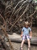 Logan museum vines