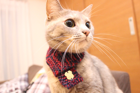 Hot knitting trend in Japan: knit scarves for cats. Would you make one?