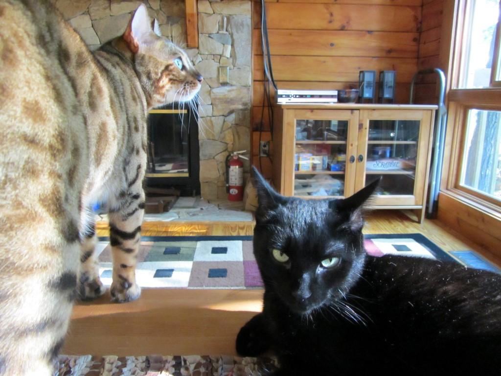Cats Photobomb