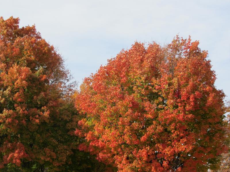 2013_rhinebeck_trees2