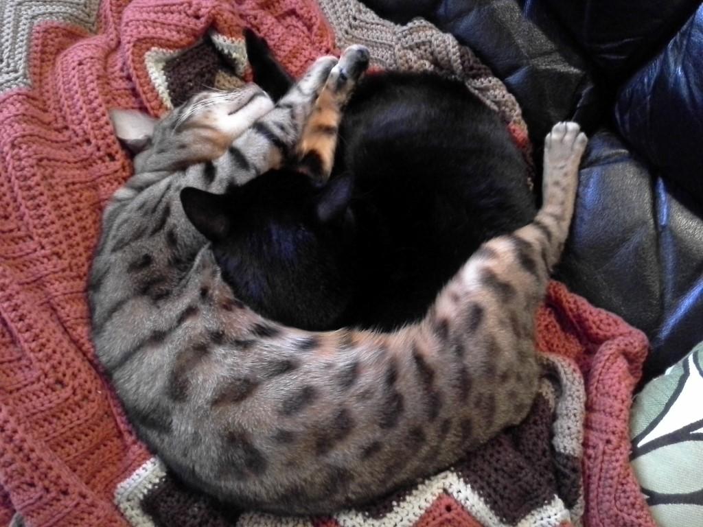cats_spooning1