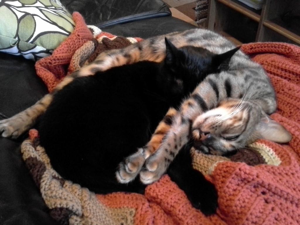 cats_spooning2