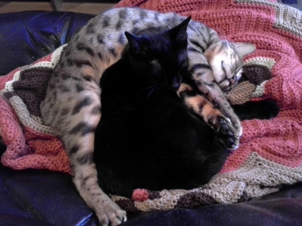cats_spooning3