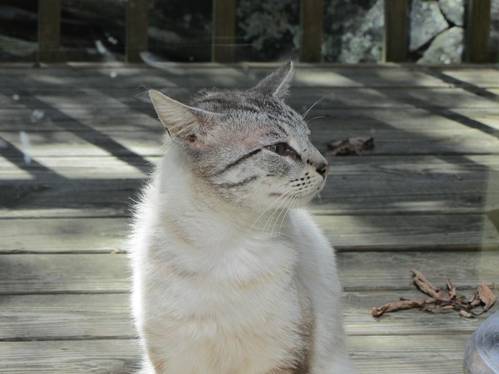porch_cat_profile