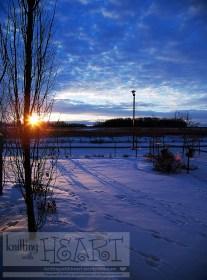 Snowy backyard sunset and tree.