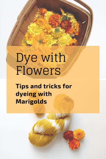 One of the easiest natural dyes out there, marigolds give a bright, cheerful yellow on almost all fiber types!