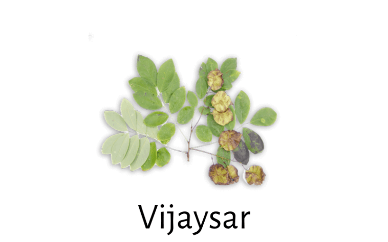 Pterocarpus Marsupium (Vijaysar) for Diabetes