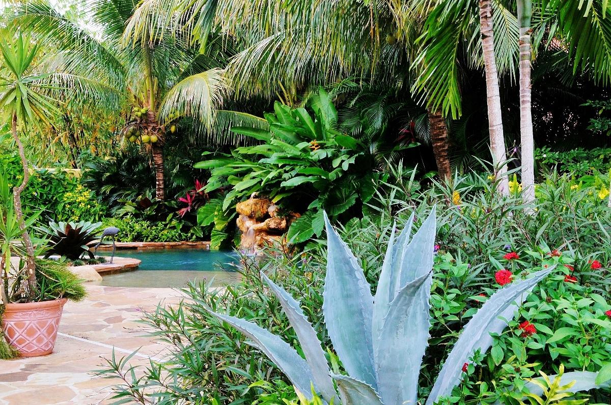 Tropical Landscape Garden Design Miami- Knoll Landscape on Tropical Small Backyard Ideas id=23420