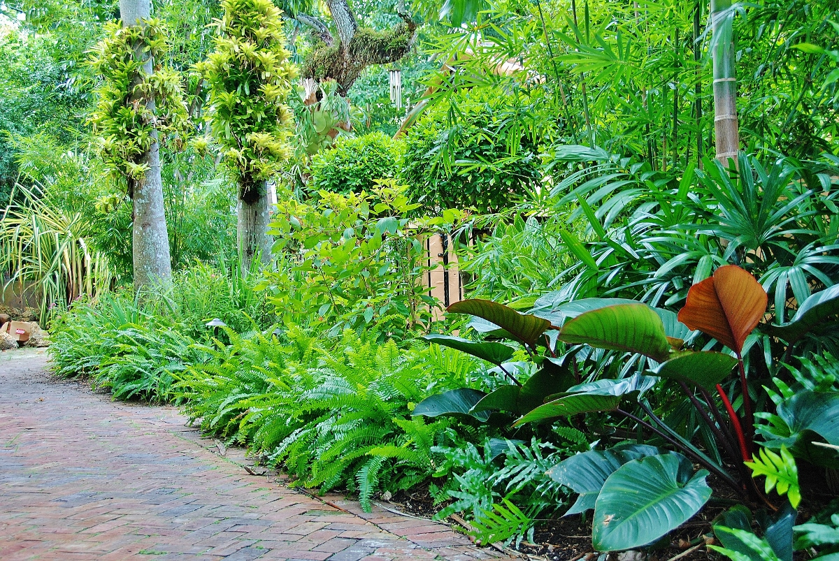Tropical Landscape Garden Design Miami- Knoll Landscape on Tropical Small Backyard Ideas id=50634