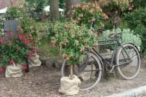 Fuchsia's Eynderhoof