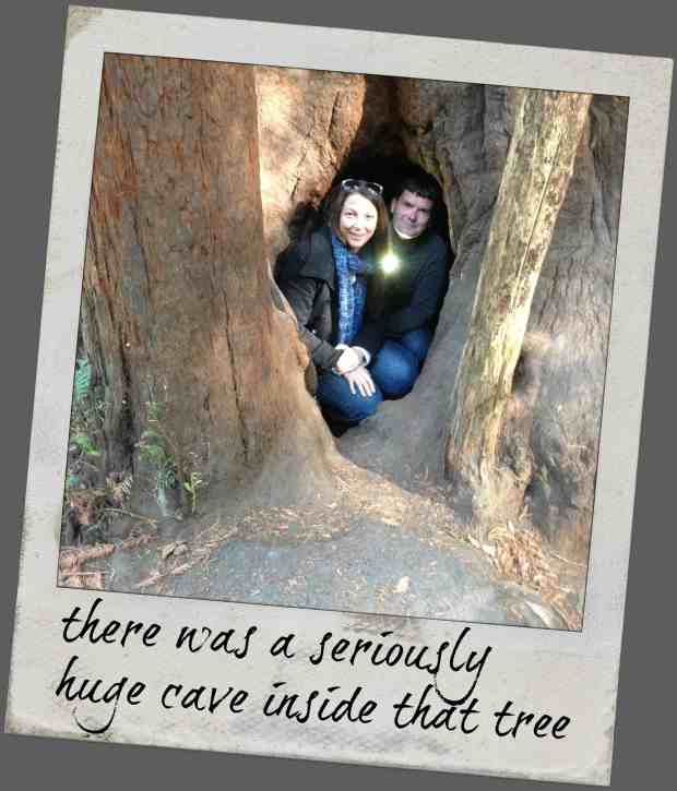 knowgluten in Northern California - inside a redwood tree